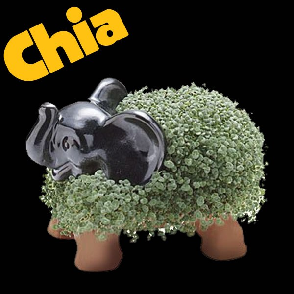 Chia Elephant As Seen On Tv