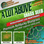 Cut Above Grass Seed