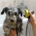 Pet Healing Shower Head