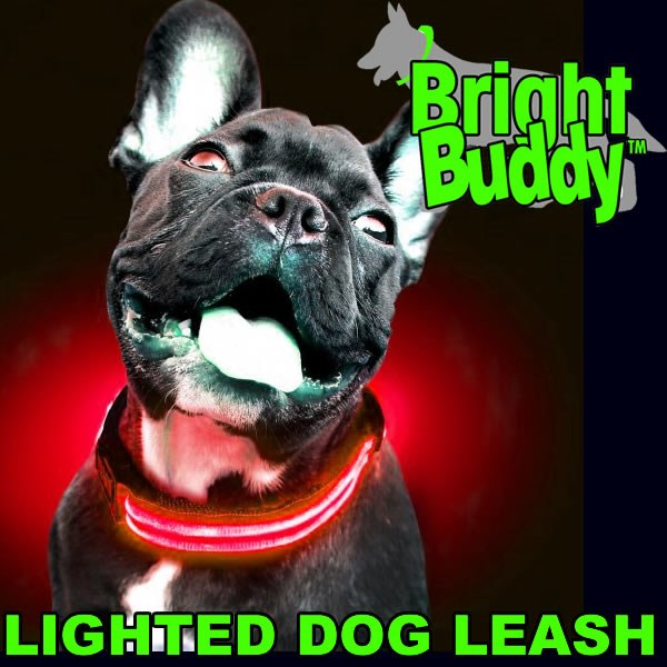 Bright Buddy Leash