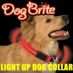 Dog Brite EL Lighted Collar