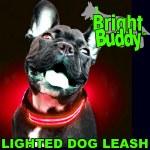 Bright Buddy Leash